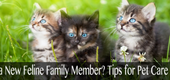 Adding a New Feline Family Member?  Tips for Pet Care for Cats in Idaho Falls